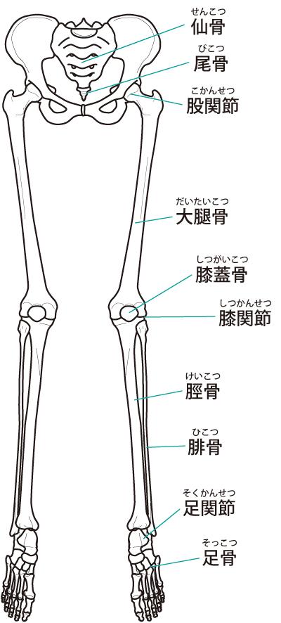 骨盤や背骨の歪みは膝痛の原因になります。