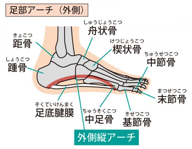 足底筋膜炎とは、足の筋膜・腱膜に炎症が起こる症状です。